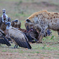 Among The Vultures 3 by Leigh Lofgren