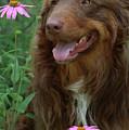 Amongst The Flowers by Kim Henderson