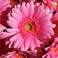 Amsterdam In Pink by KG Thienemann