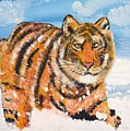 Amur Tiger by Valerie Ornstein