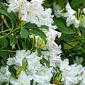 An Abundance Of White by Brenda Kean