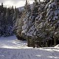 An Alpine Ski Trail On Wildcat Mountain by Tim Laman