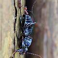 An Ant's Haul by Jennifer Churchman