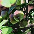An Apple A Day by Carol  Eliassen