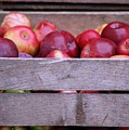 An Apple A Day by Cynthia Bowen