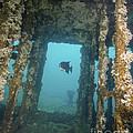 An Atlantic Spadefish Swims Amongst by Brent Barnes