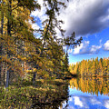 An Autumn Day At Woodcraft Camp by David Patterson