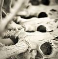 An Echo Of Mortality by Rebecca Sherman