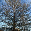 A Late Spring by Ann Evangelista