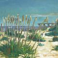 Anastasia Island by D T LaVercombe