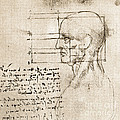Anatomical Drawing By Leonardo Da Vinci by Wellcome Images