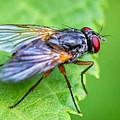 Anatomy Of A Pest by Steve Harrington