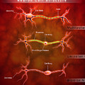 Anatomy Structure Of Neurons by Stocktrek Images