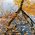 Anchorage In Autumn by Monique Michel