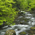 Ancient Cascades In Great Smoky Mountains by Darrell Young