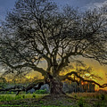 Ancient Live Oak Tree by Jerry Gammon