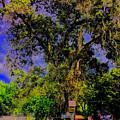 Ancient Oak At Rinconada De Los Gatos S by Scott L Holtslander