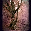 Ancient Tree By A Stream by Laura Iverson