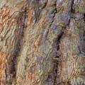 Ancient Tree Skin by Igor Zharkov