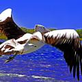 And The Seagull Follows Pelican by Miroslava Jurcik