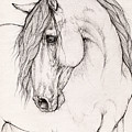 Andalusian Horse Portrait 2015 12 08 by Angel Ciesniarska