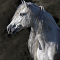 Andalusian Portrait by Wes and Dotty Weber