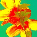Andy Warhol Inspired Yellow Flower by Filipa Mendes