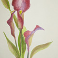 Andy's Calla Lillies by Marsha Elliott