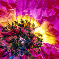 Anemone Abstracted In Fuchsia by Anna Porter