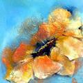 Anemone by Dragica  Micki Fortuna