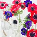 Anemone Flowers  by Anastasy Yarmolovich