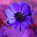 Anemone In Purple by Terry Davis