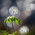 Anemone  by Rikard Strand