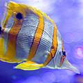 Angel Fish by Carl Jackson