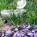 Angel Garden by Emily Kelley
