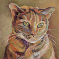 Calico Cat by Jane Oriel