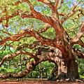 Angel Oak - Charleston Sc  by Drew Castelhano
