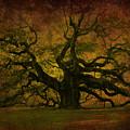 Angel Oak 3 Charleston by Susanne Van Hulst
