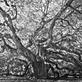 Angel Oak II by Drew Castelhano