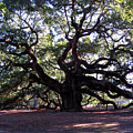 Angel Oak II by Susanne Van Hulst