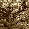 Angel Oak In Sepia by Suzanne Gaff
