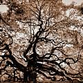 Angel Oak Johns Island Sc by Yvette Wilson