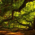 Angel Oak Limbs 2 by Susanne Van Hulst
