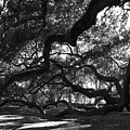 Angel Oak Limbs Bw by Susanne Van Hulst