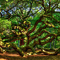 Angel Oak Morning Shadows Charleston South Carolina by Reid Callaway
