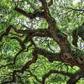 Angel Oak by Ronald Kotinsky