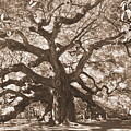Angel Oak Sepia by Lisa Wooten