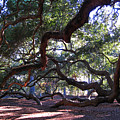 Angel Oak Side View by Susanne Van Hulst