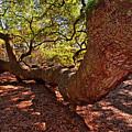 Angel Oak Tree 003 by George Bostian