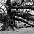 Angel Oak Tree 2009 Black And White by Louis Dallara